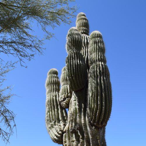 A Desert Escape in Scottsdale