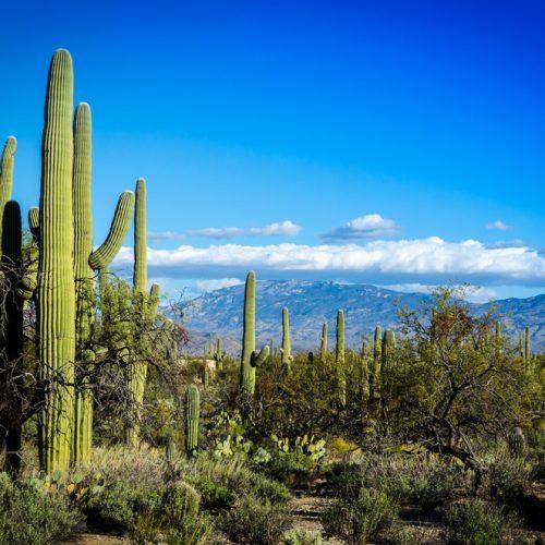 Deserted In Arizona: Day 1
